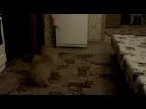 наш котенька играет в игрушки :-)